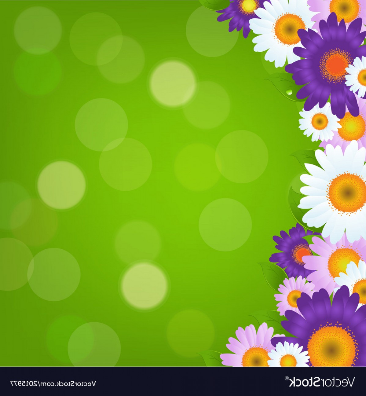 Purple Gerber Daisy Vector Framw: Colorful Gerbers Flowers Frame With Green Bokeh Vector