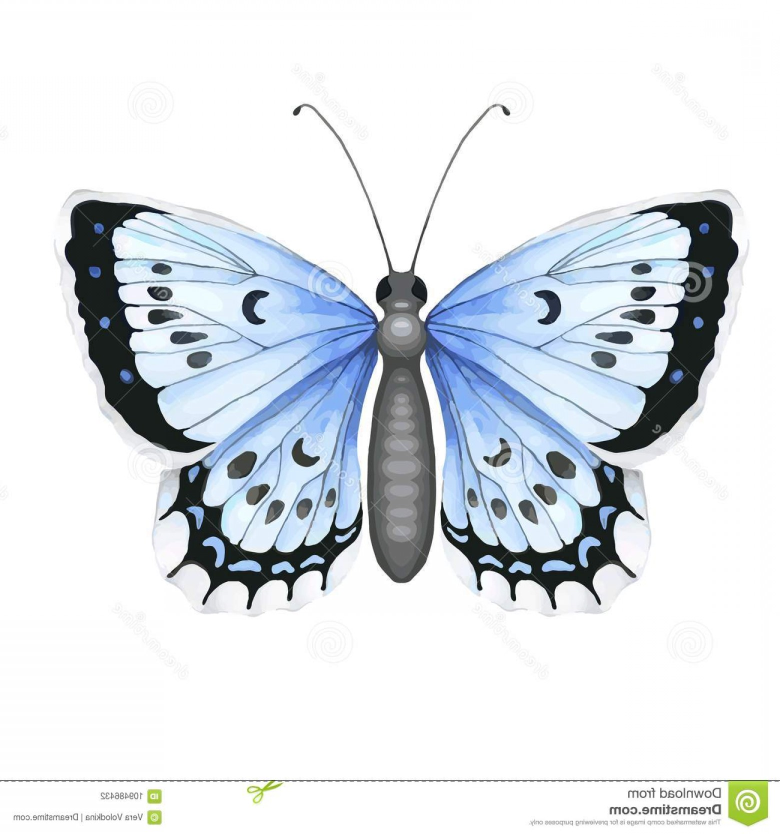 Real Butterfly Vector: Colorful Realistic Butterfly Isolated White Background Top View Art Vector Illustration Image