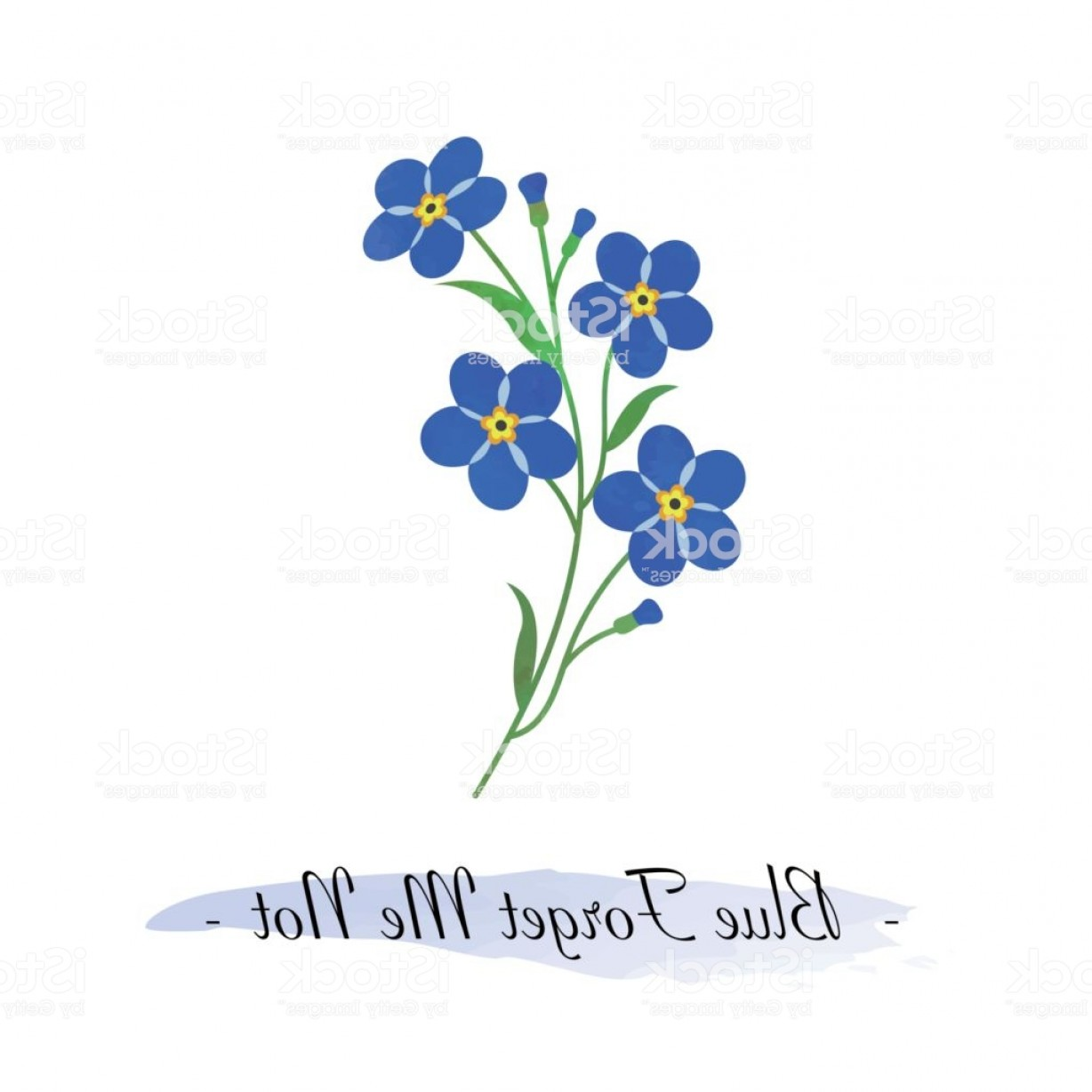 Get For Me Not Flower Watercolor Vector Art: Colorful Watercolor Texture Vector Botanic Garden Flower Blue Forget Me Not Gm