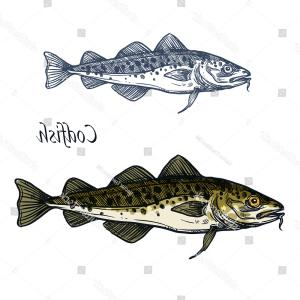 Food Fish Vector Icon: Cod Fish Vector Sketch Icon Isolated