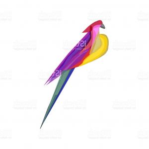 Abstract Vector Art Parrot: Hand Drawn Vector Abstract Graphic Ink Realistic Tropical Parrot Illustration Gm