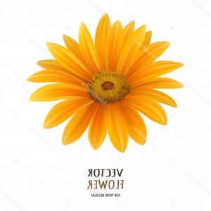 Orange Gerber Daisy Vector: Trendy Gerber Daisy Isolated On White Background Vector