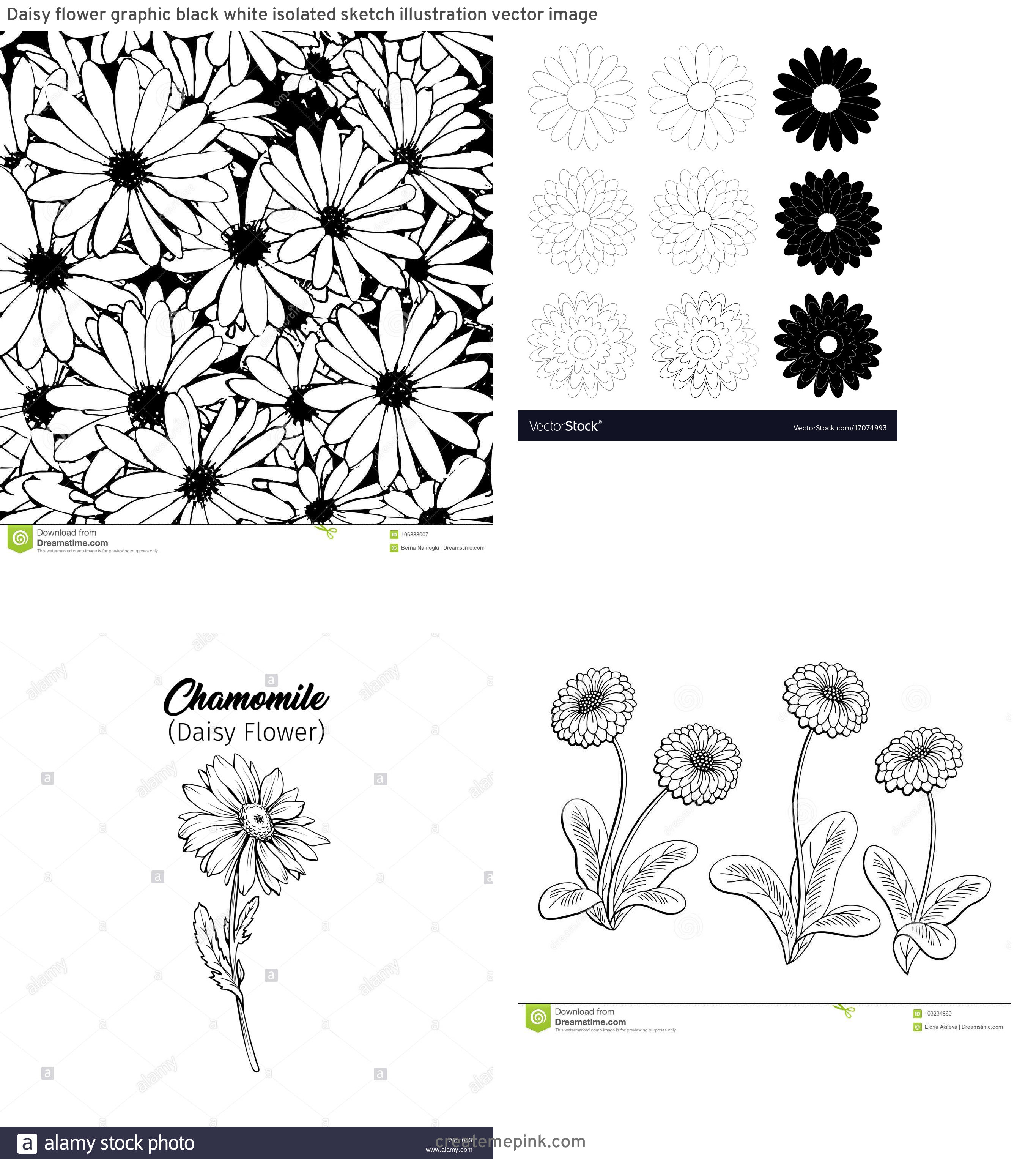 Flower Daisey Black Vector Art: Daisy Flower Graphic Black White Isolated Sketch Illustration Vector Image