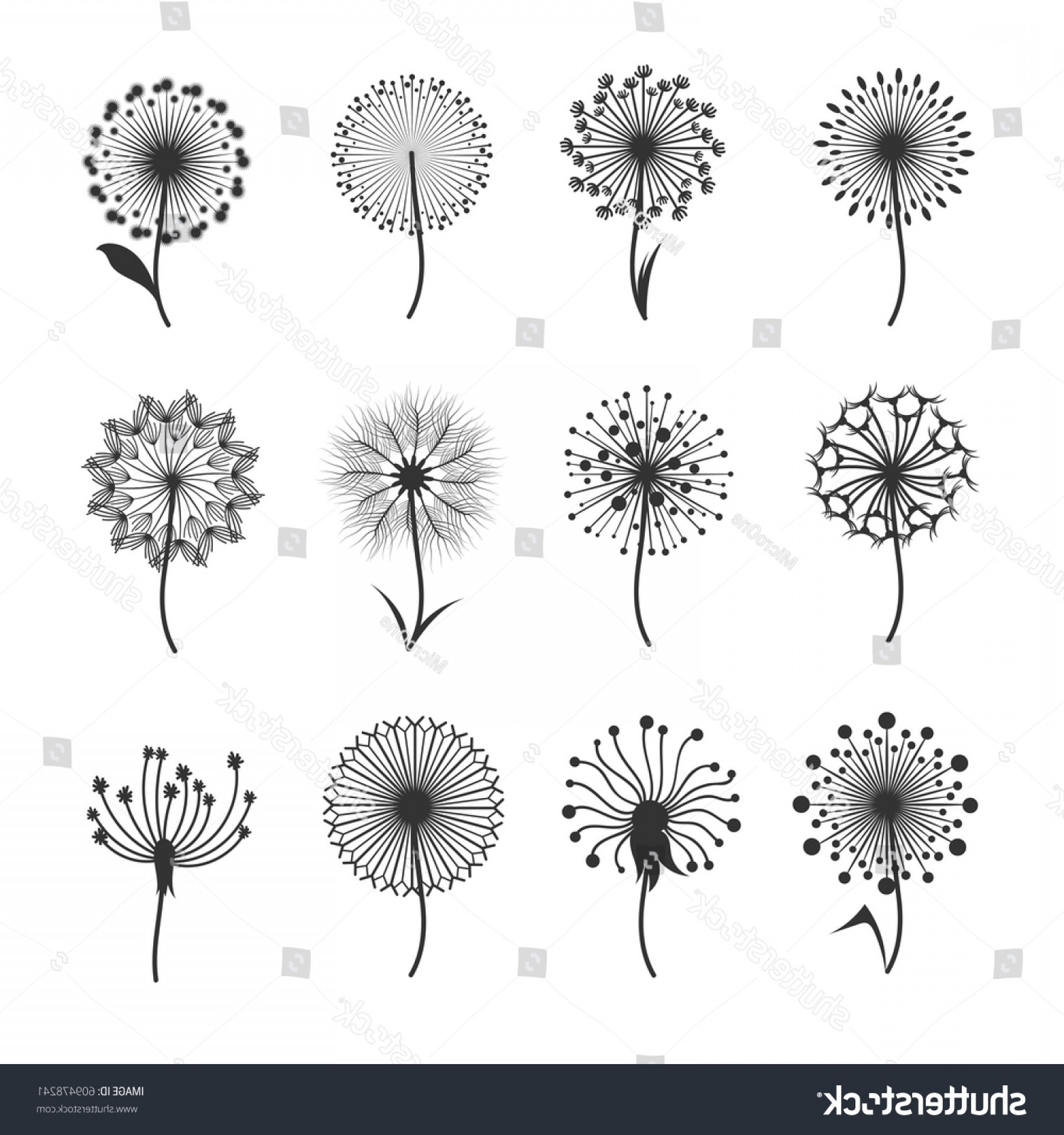 Seed Flower Vectors: Dandelion Flowers Fluffy Seeds Black Floral