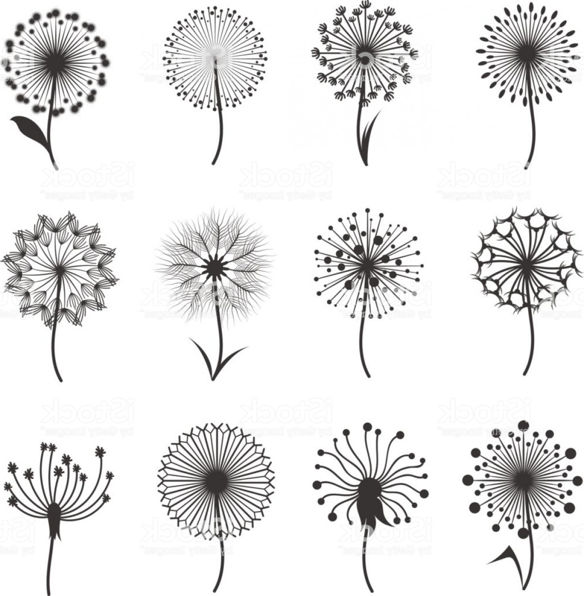 Seed Flower Vectors: Dandelion Flowers With Fluffy Seeds Black Floral Vector Silhouettes Isolated On White Gm