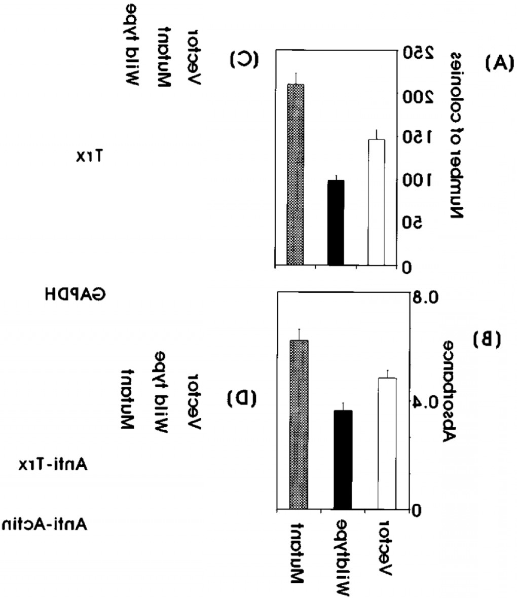 Mammalian Expression Vector: Death Promoting Eect Of Trx A Overexpression Of Trx Results In A Loss Of Cellfig