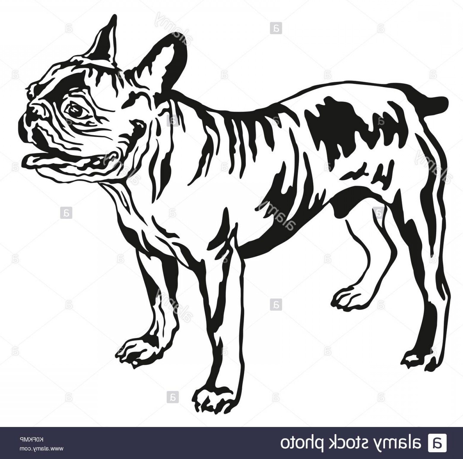 Bulldog Vector Art: Decorative Portrait Of Standing In Profile French Bulldog Vector Isolated Image
