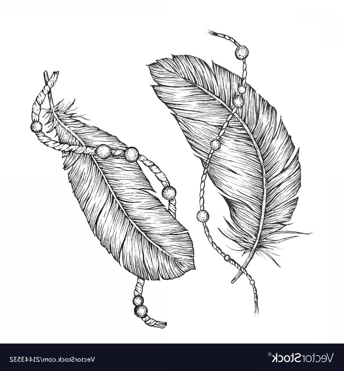 Vector Drawing Feathers: Detailed Hand Drawn Feathers Vector