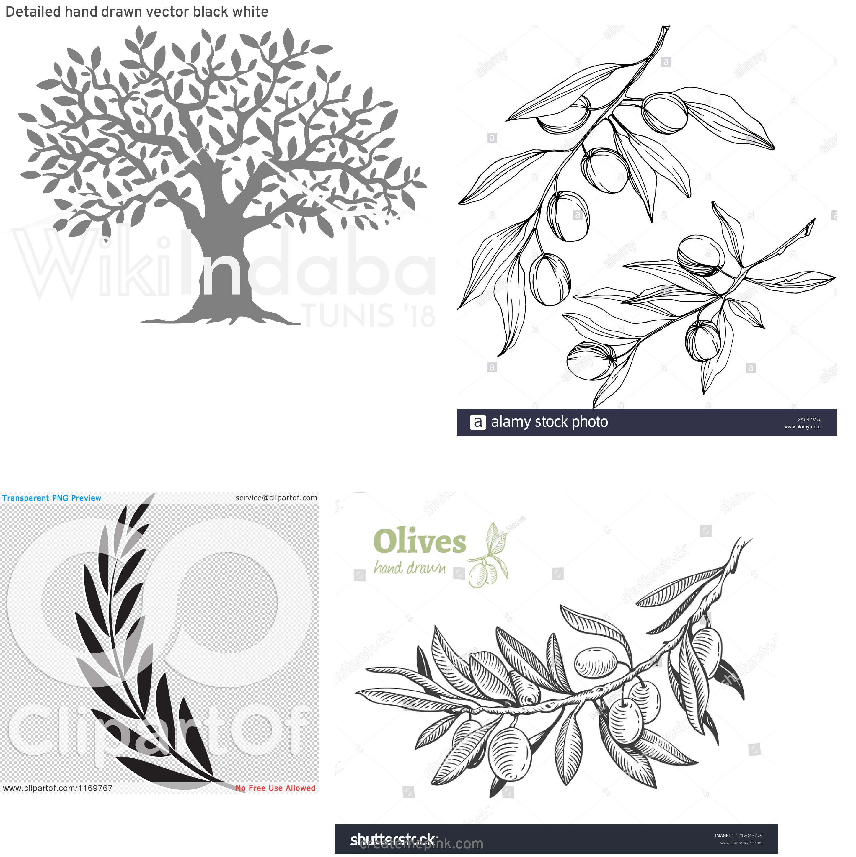 Olive Black And White Vector Leaves: Detailed Hand Drawn Vector Black White