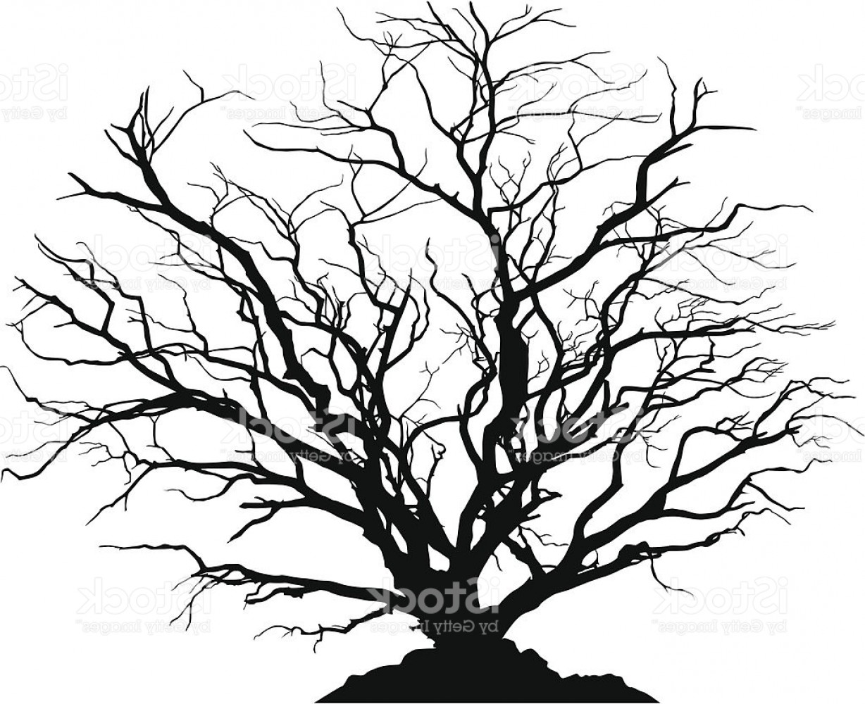 Tree Silhouette Vector Clip Art: Detailed Silhouette Of A Round Deciduous Tree With No Leaves Gm