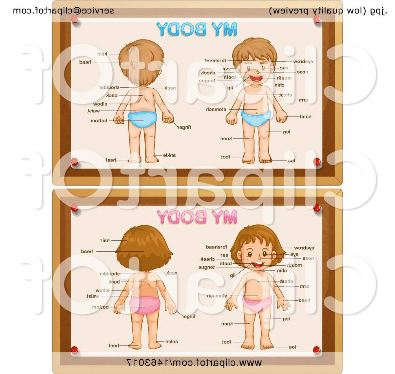 Female Parts Vector: Diagrams Of A Girl And Boy With Labeled Body Parts