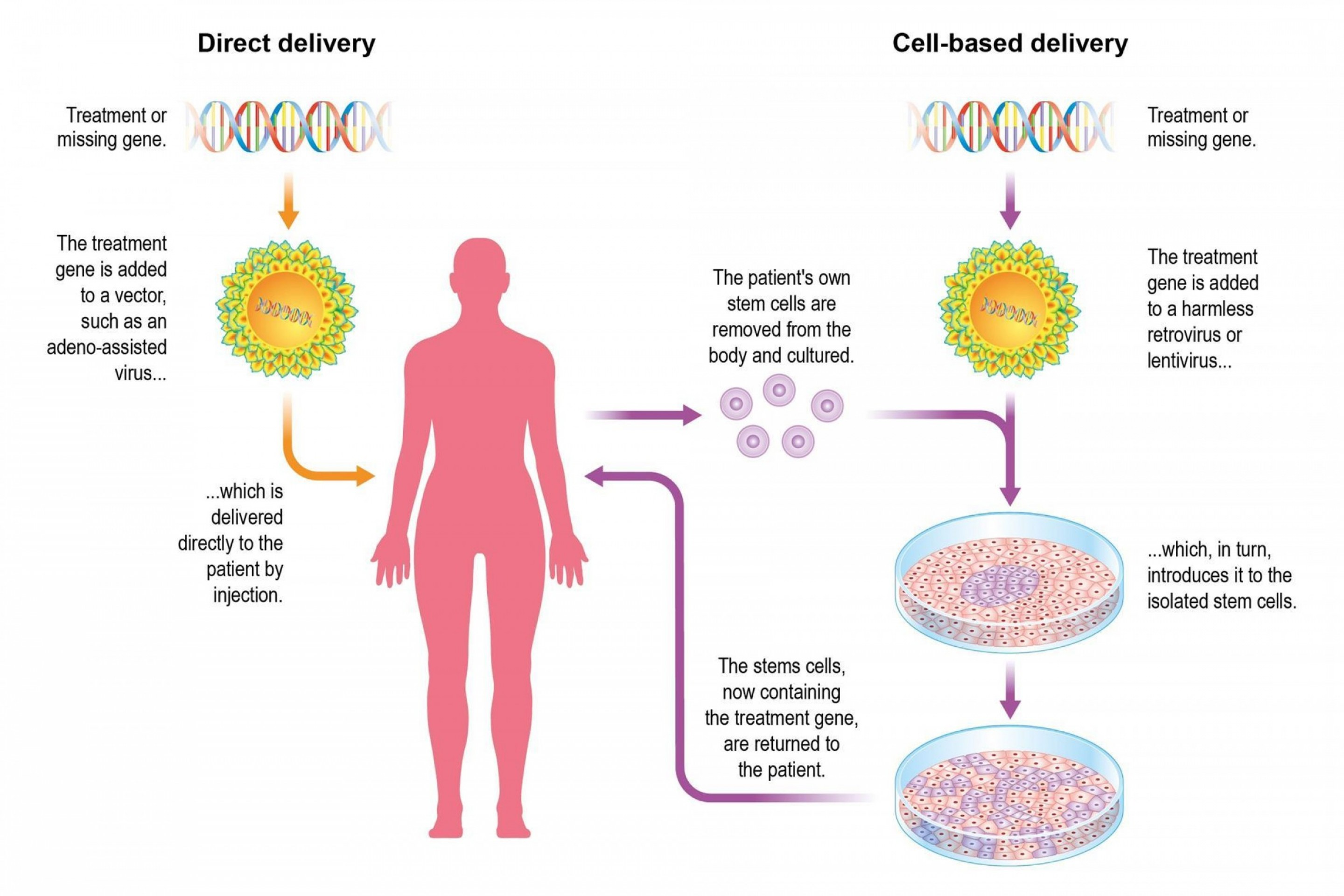 What Are Vectors Used For: Differences Between Viral And Non Viral Vectors Used For Gene Therapy