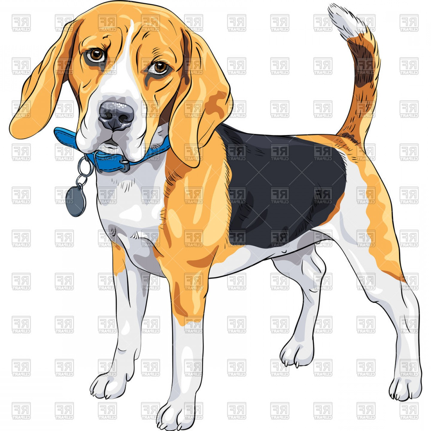 Vector Art Beagle Dog: Dog Beagle In Standing With Blue Collar Vector Clipart