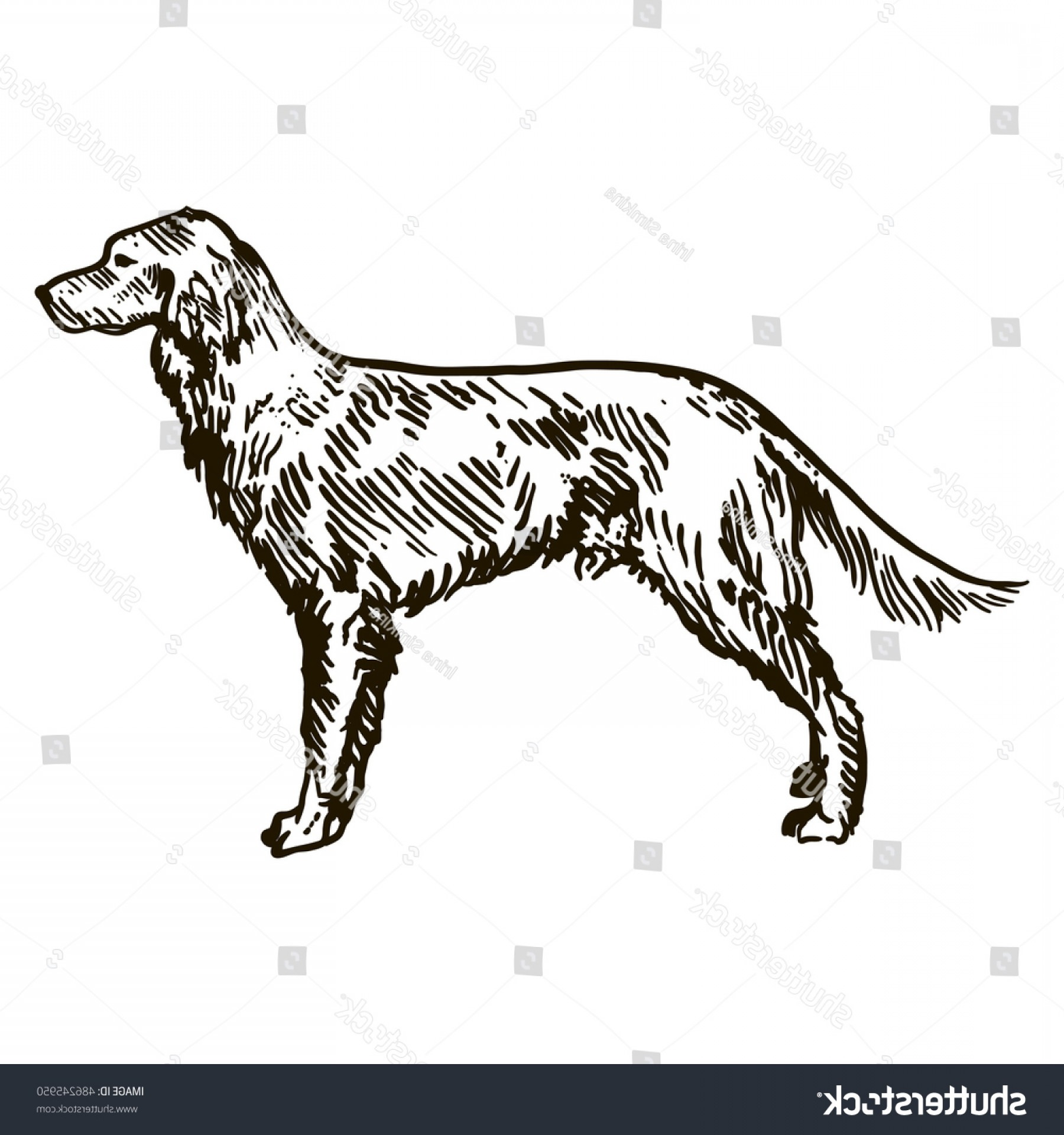 Double Boxer Dog Vector: Dog Hand Drawn English Setter Vector
