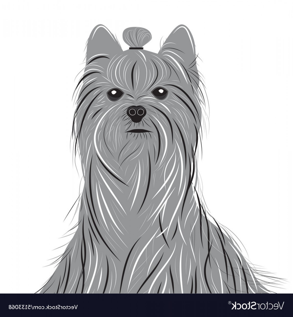 Cute Yorkie Dog Vector: Dog Yorkshire Terrier Portrait Of A Domestic Dog Vector