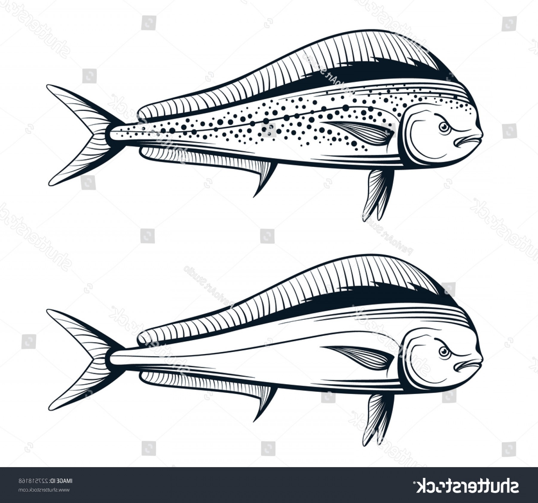 Mahi Mahi Outline Vector Images: Dolphin Fish Outline Engraving Vector Illustration