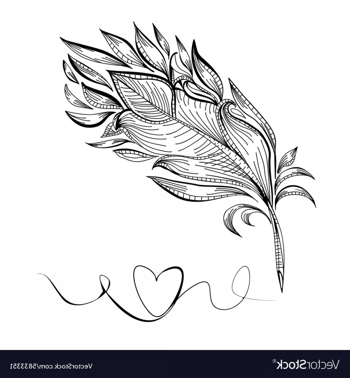 Vector Drawing Feathers: Drawing A Bird Feather Line Vector