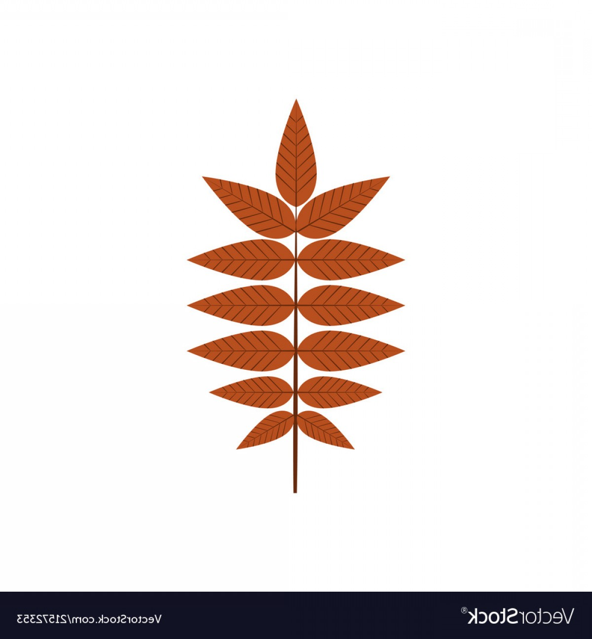 Vector Leaf Graphicd: Dry Brown Autumn Leaves Graphic Design Vector