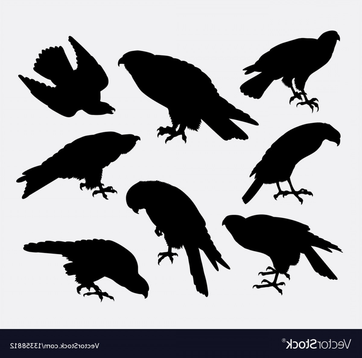 Falcon Silhouette Vector: Eagle Falcon Hawk Bird Animal Silhouette Vector