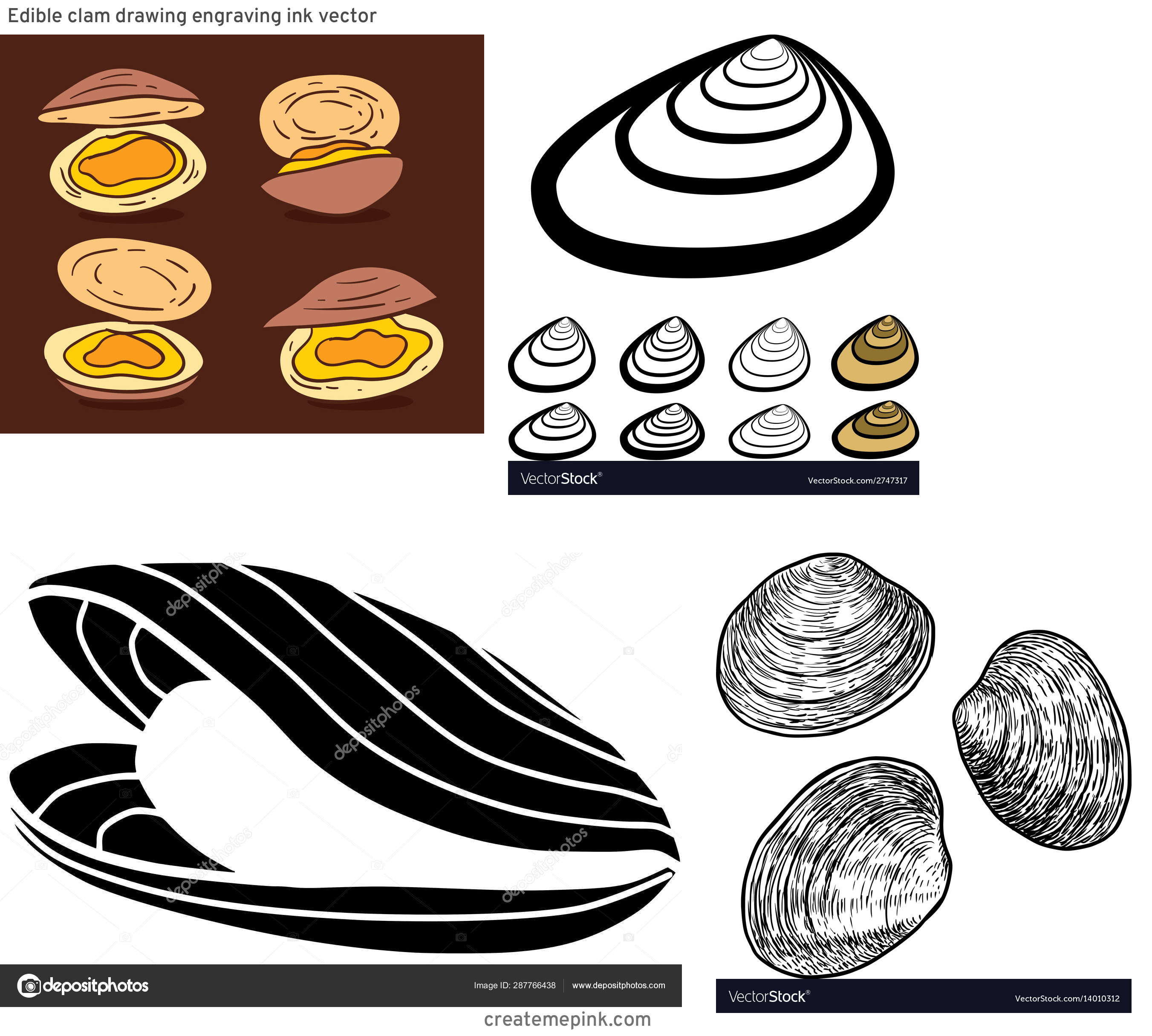 Clam Vector: Edible Clam Drawing Engraving Ink Vector
