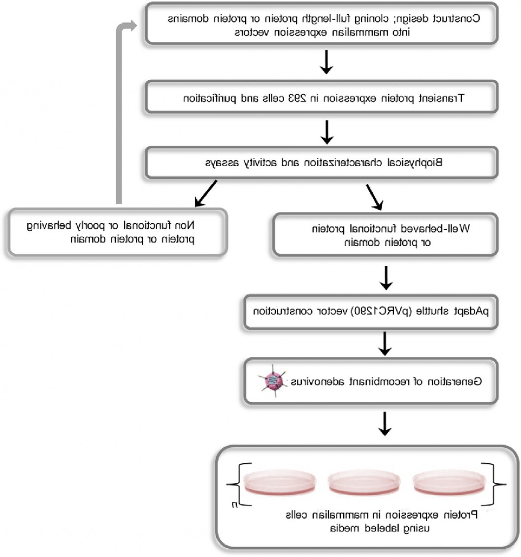 Mammalian Expression Vector: Effective Isotope Labeling Of Proteins In A System
