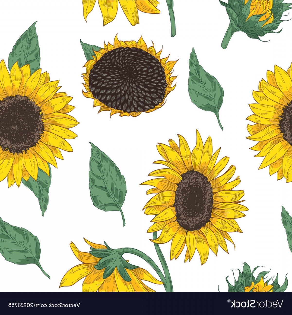 Sunflower Vector Pattern: Elegant Floral Seamless Pattern With Sunflower Vector