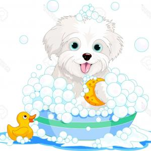 Dog Bubble Bath Vector: Elegant Photowhite Fluffy Dog Having A Soapy Bath