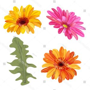 Orange Gerber Daisy Vector: Cute Stock Illustration Hand Drawn Vector Realistic Illustration