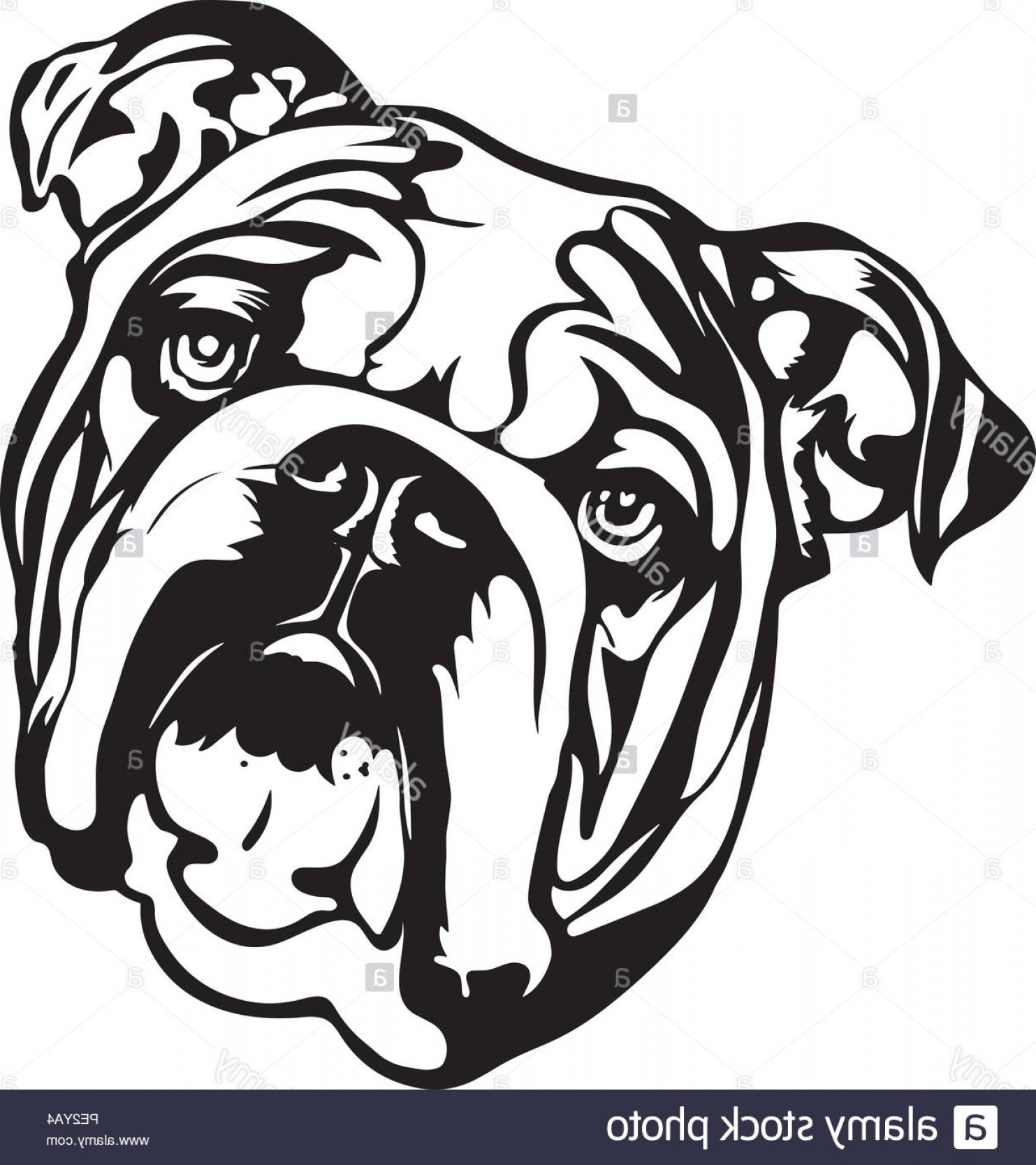 Bulldog Vector Art: English Bulldog Breed Pet Puppy Isolated Head Face Image