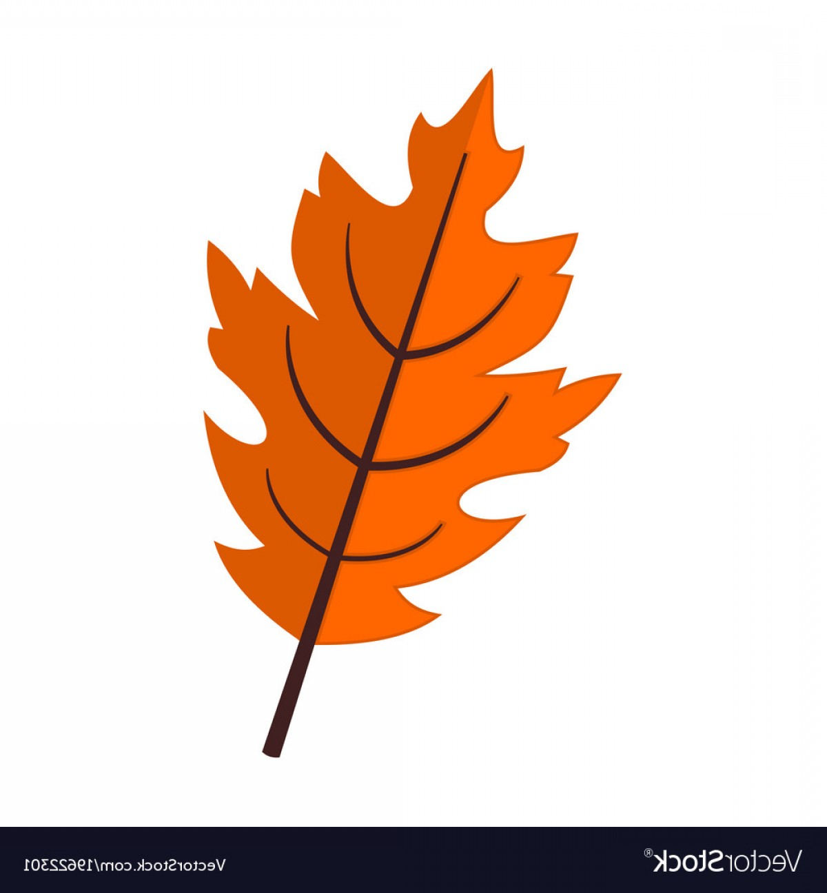 Vector Leaf Graphicd: Fall Season Oak Leaf Graphic Vector