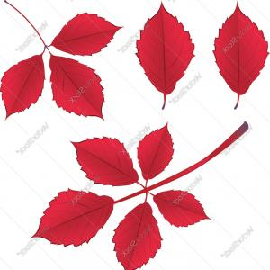Autumn Branch Vector: Fall Leaves On Branch Vector Eps Ai File