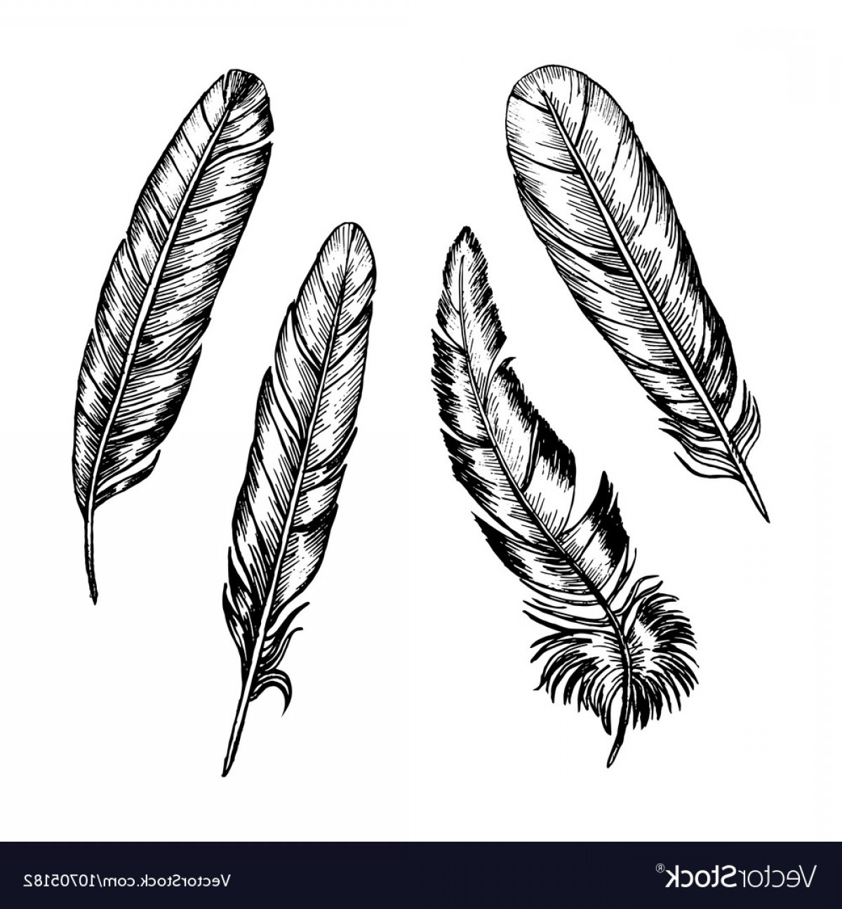 Vector Drawing Feathers: Feathers Set Hand Draw Sketch Vector