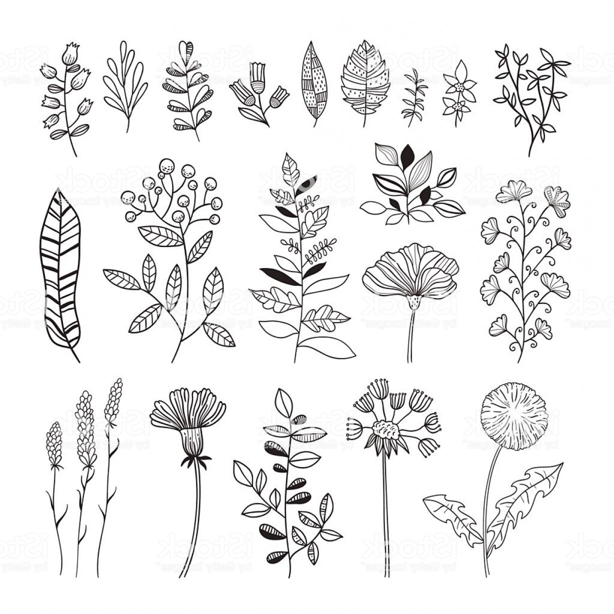 Botanical Flower Vectors: Floral Botanical Vector Set Hand Drawn Flowers And Plants Gm
