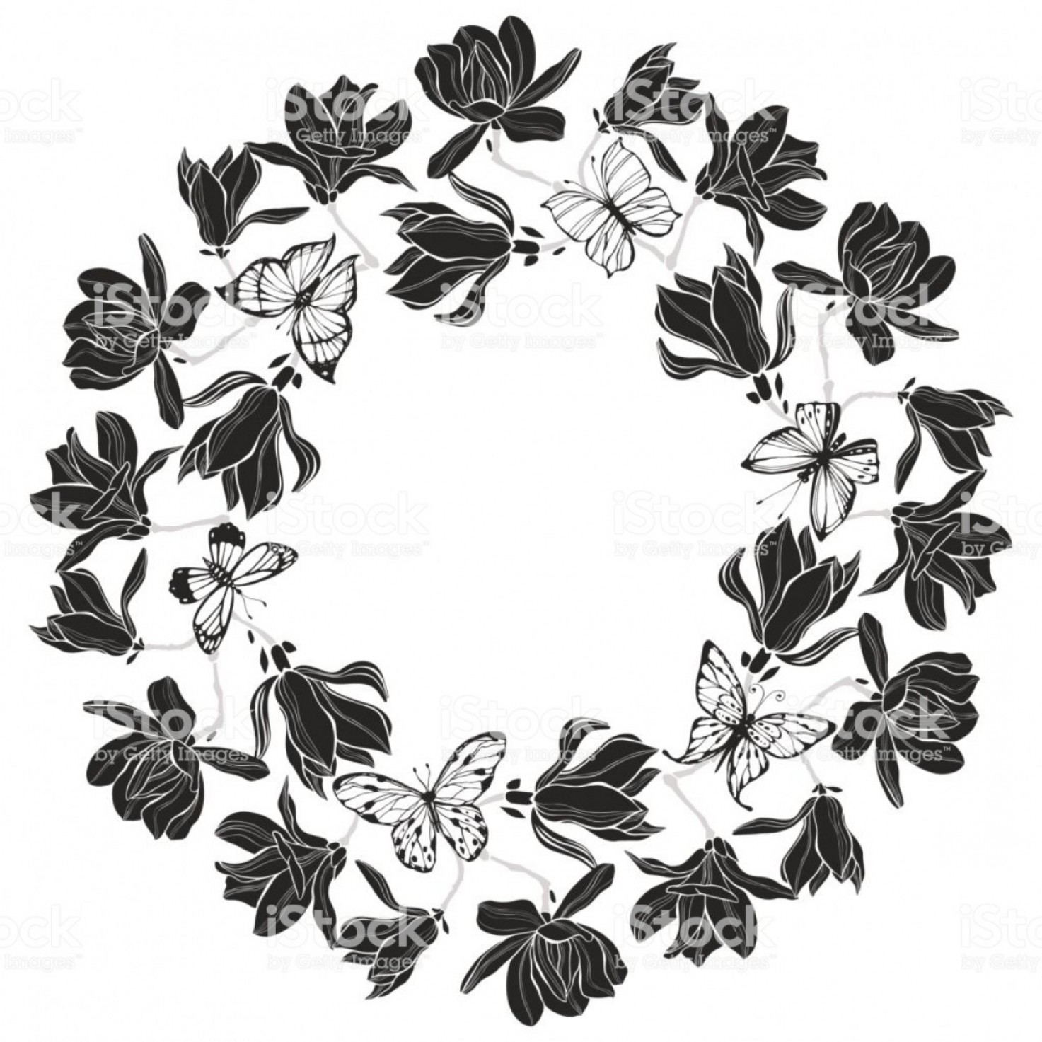 Magnolia Black And White Vector: Floral Vector Background With Magnolia And Butterflies Black And White Vector Gm