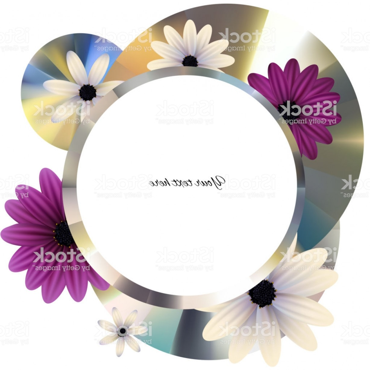 Purple Gerber Daisy Vector Framw: Flowers Gerbera Daisy Purple White Floral Background Frame Border A Circle Disk Metal Gm