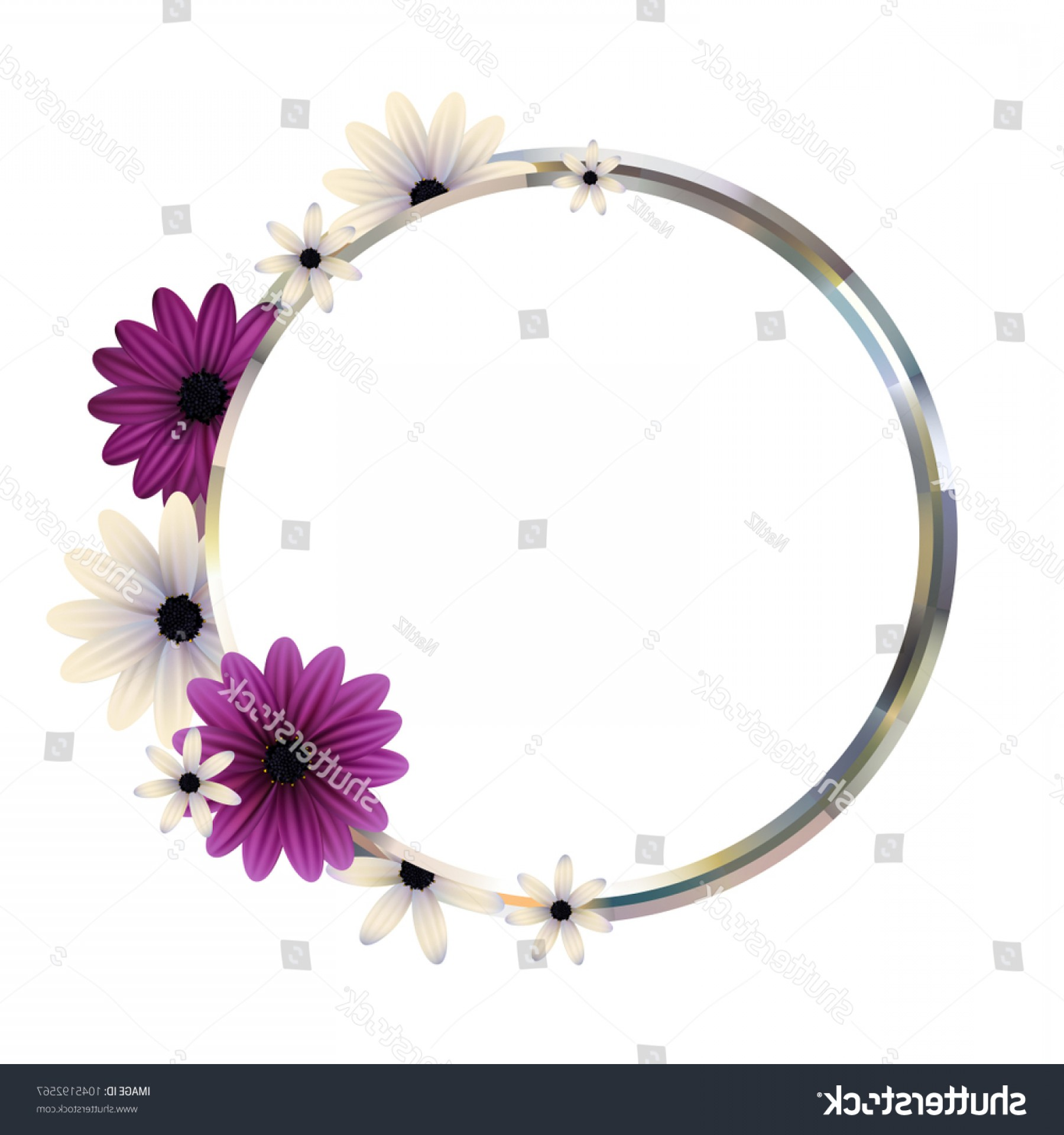 Purple Gerber Daisy Vector Framw: Flowers Purple Round Frame Floral Background