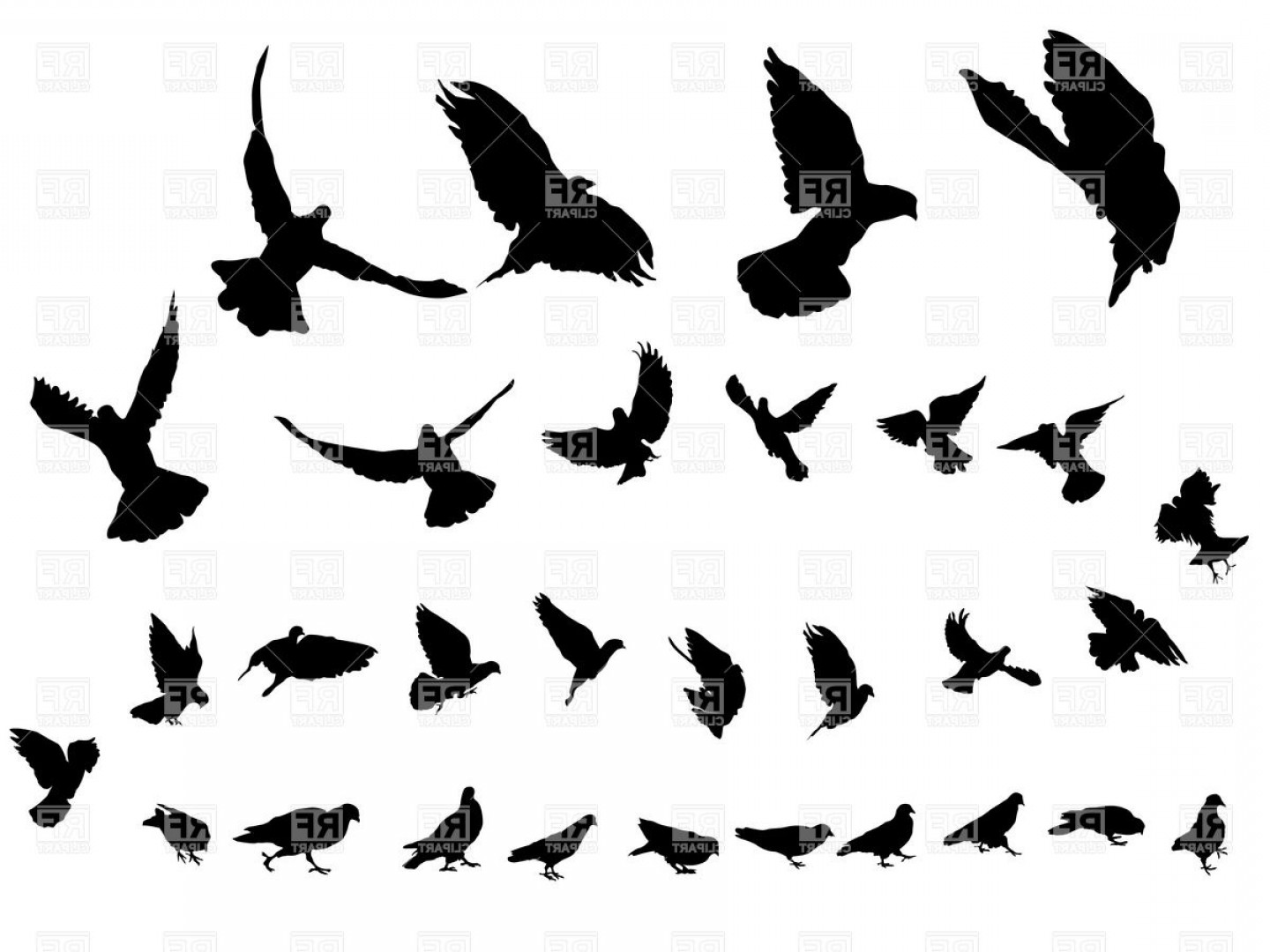 Bird Flying Vector Art: Flying Dove Silhouettes Vector Clipart