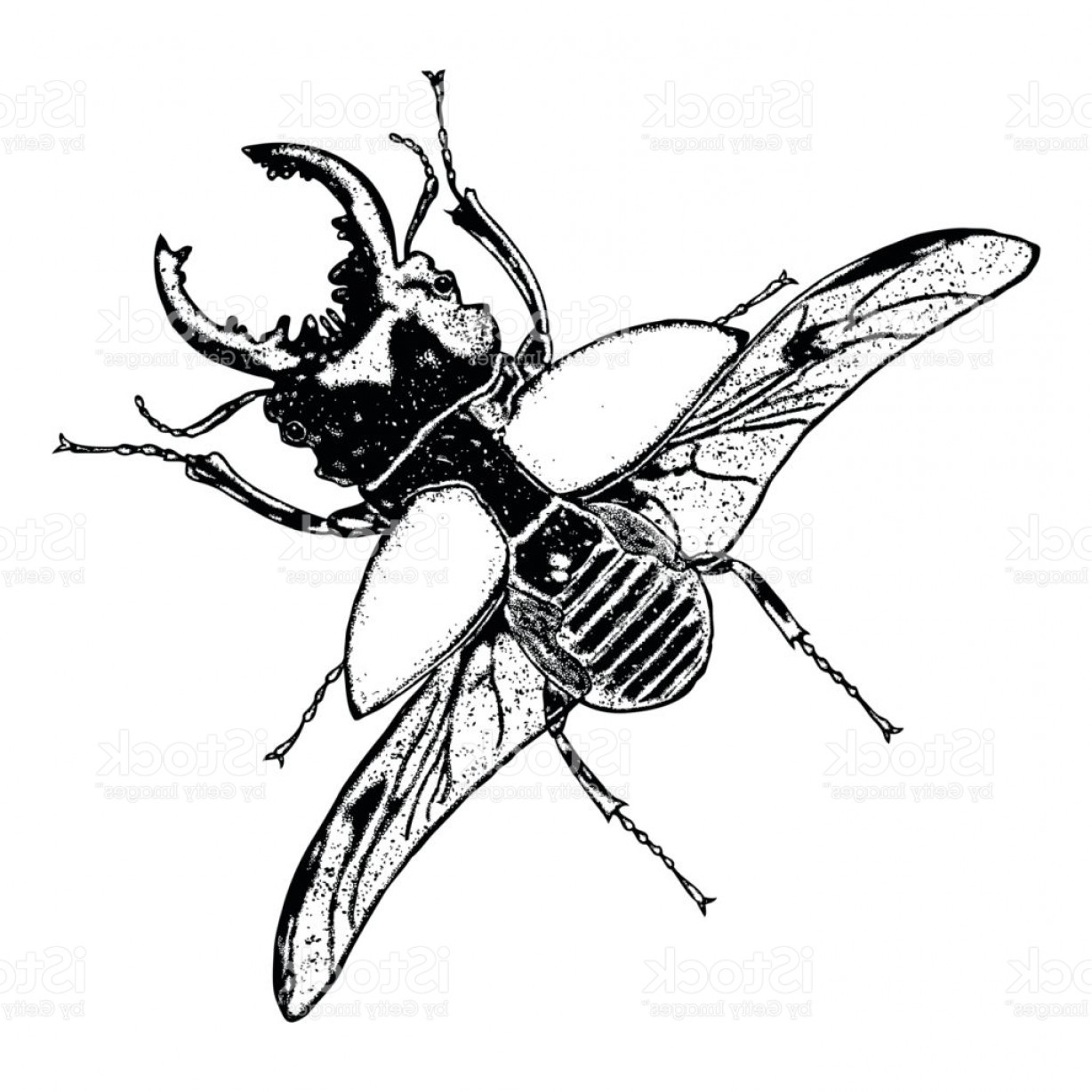 Bug Vector Art: Flying Insect Bug With Wings Scarab Beetle Vintage Old Hand Drawn Stippling And Gm