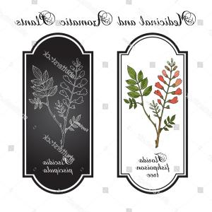 Dogwood Tree Vector: And A Partridge In A Pear Tree Christmas Card In Vector Format Hctptzldwjgqtg