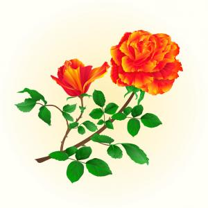 Bud Vector: Flower Orange Rose With Bud Vintage Vector