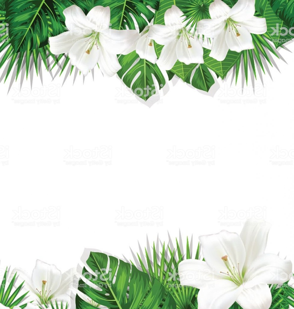 Lily Vector Art: Frame Branch Tropical Leaves And White Flowers Lily Gm