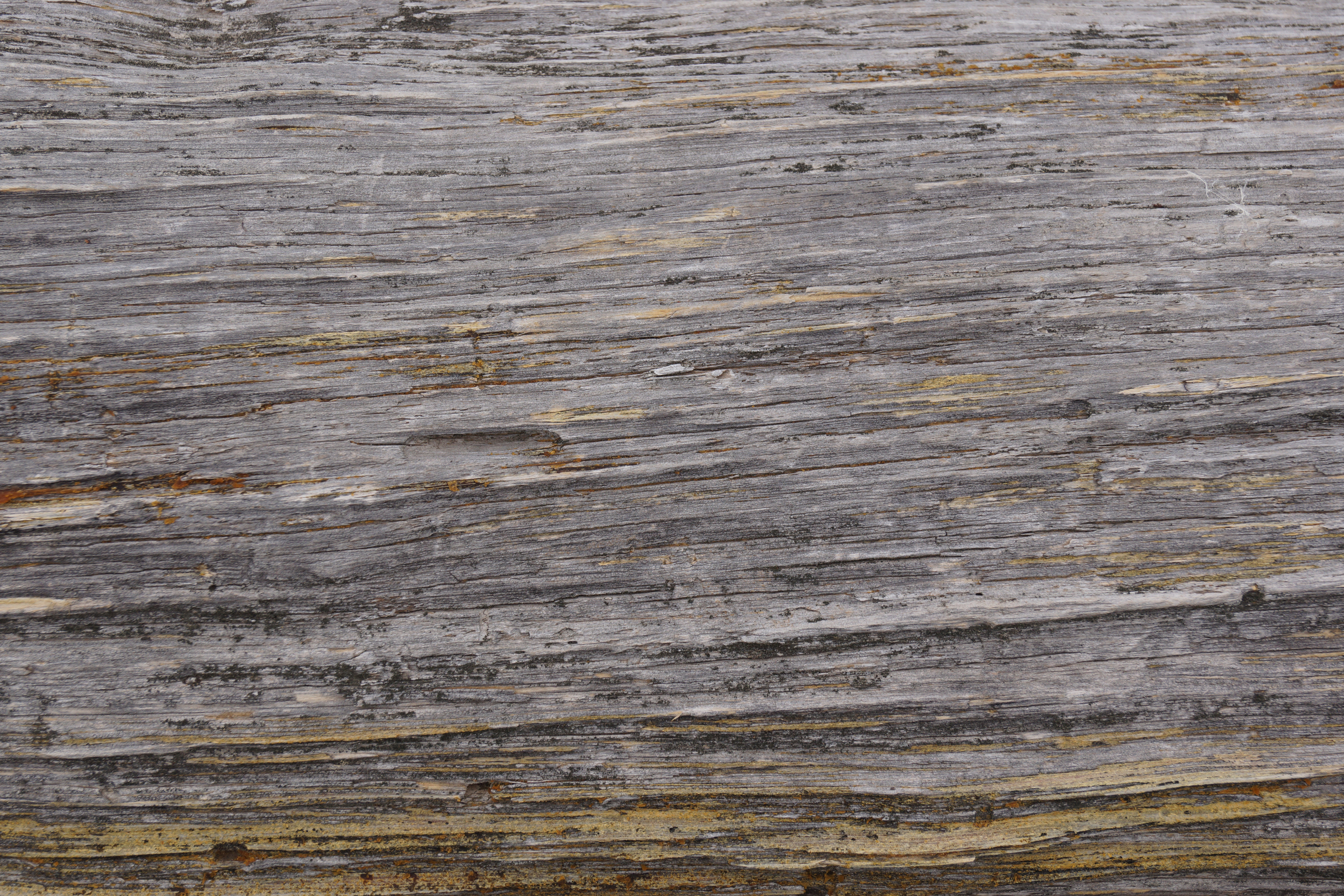 Free High Rez Grunge Texture Download Grainy Wood Grain