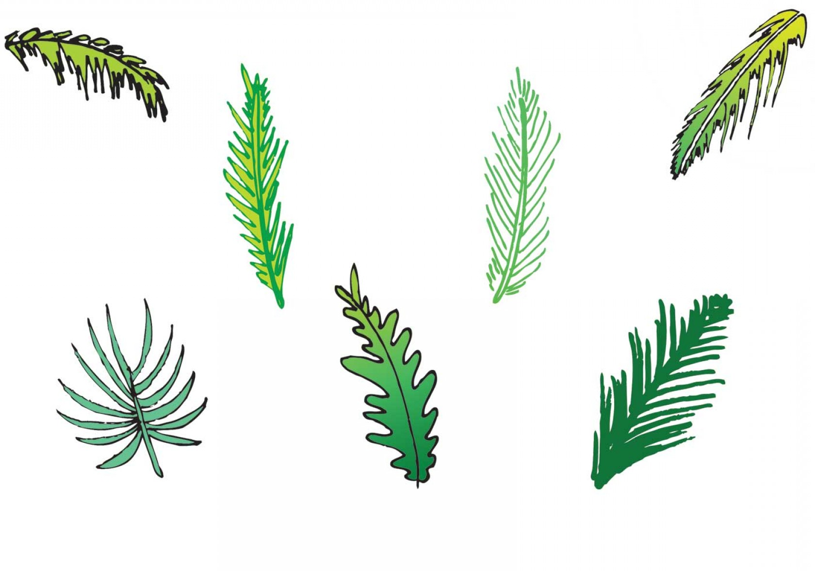 Pine Leaf Vector: Free Palm Leaf Isolated Vector Series
