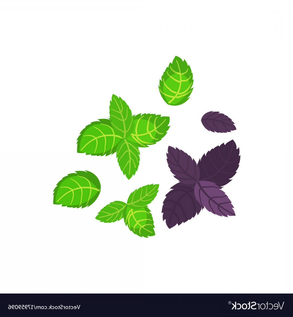 Basil Vector: Fresh Green Basil Leaves Icon Flat Of Basil Vector