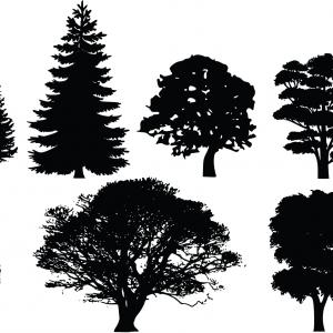 Tree Silhouette Vector Clip Art: Old Tree Silhouettes With Roots Vector Clipart