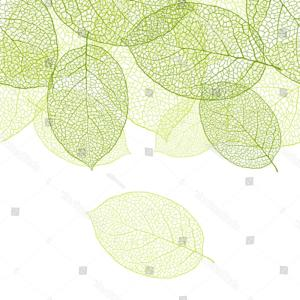 Leaf Background Vector: A Drawing Of A Pattern Of Green Leaves On A White Background Gm