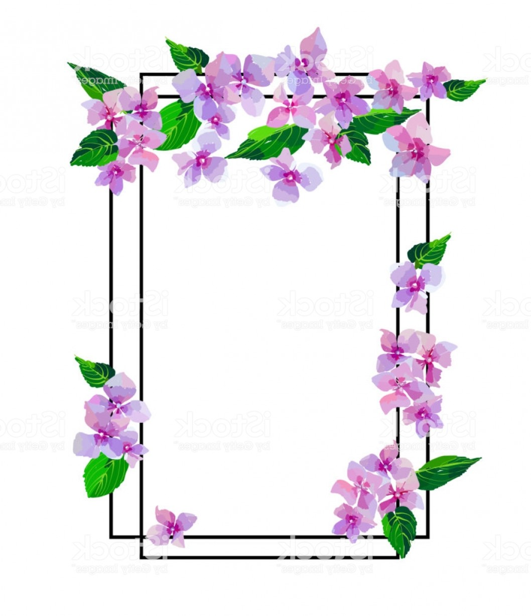 Lilac Vector Drawing: Garden Pink Hydrangea Flowers Botanical Illustration In Hand Drawn Style Lilac Gm