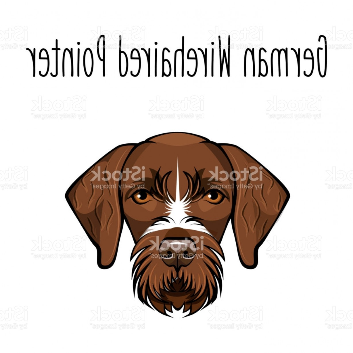 Pointer Dog Vector: German Wirehaired Pointer Dog Breed Brown Face Of Hunting Dog Vector Illustration Gm