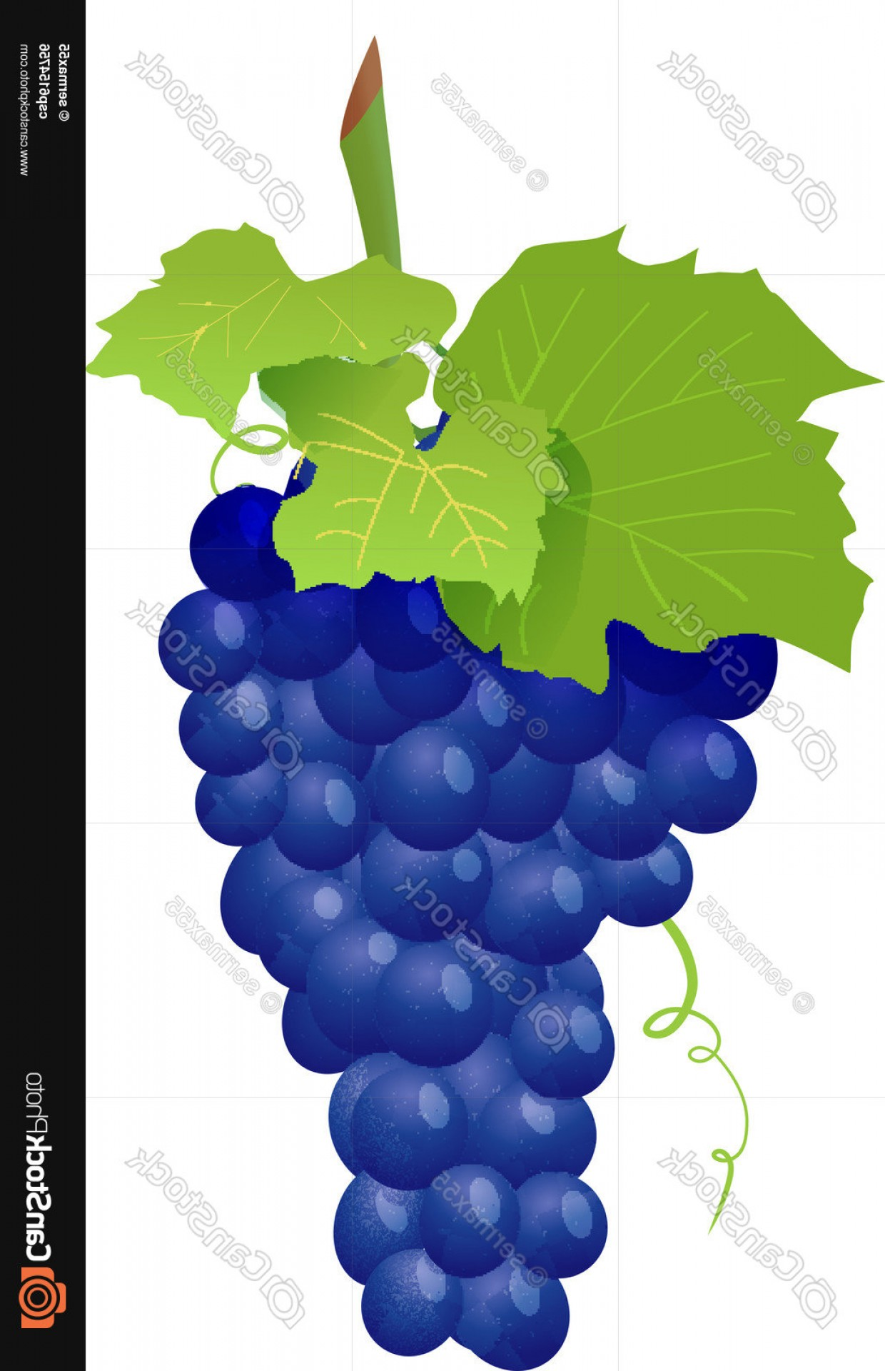Grapes Clip Art Vector: Grape Cluster Isolated On White