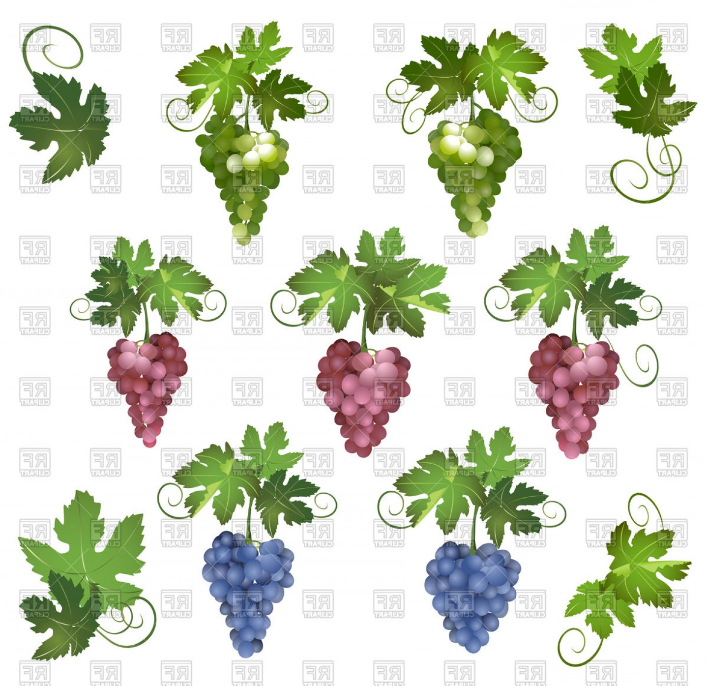 Grapes Clip Art Vector: Grapes With Green Leaves Vector Clipart